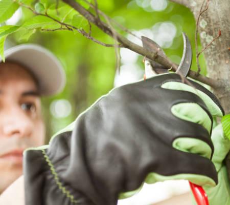 Certified Arborist Service