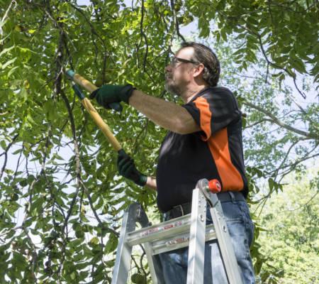 Tree Removal Gastonia NC