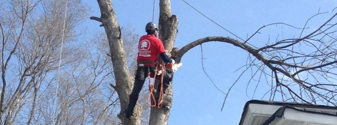 Progressive Tree Service - profile image