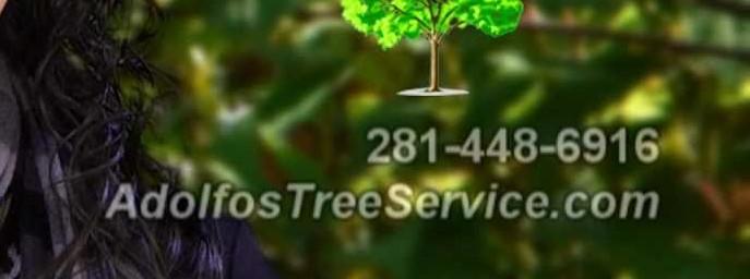 Adolfo Landscape service - profile image
