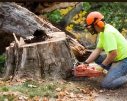 Kloeppels Tree Service
