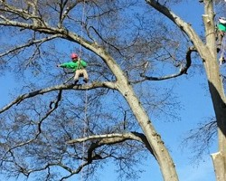 Serious Tree Services