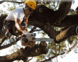 Good Guys Tree Service