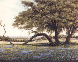The Tree Clinic