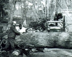 County Tree Experts