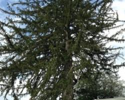 Harford Tree Experts