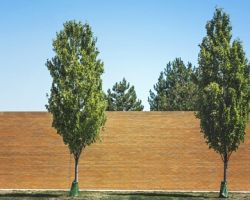 Laytons Tree Service