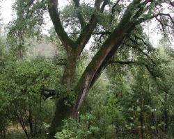 Trust Tree Service