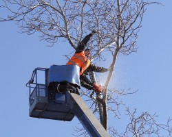 Brown Tree Service