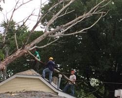 Cesars Tree Service