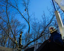 Affordable Tree Services of Ohio