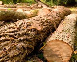 Morningstar Tree Inc