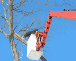 New Heights Tree Service