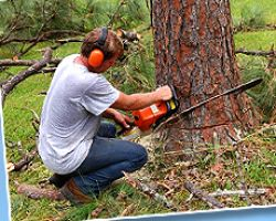 Advanced Tree Service LLC