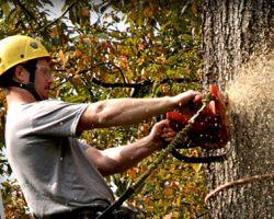 C&R Tree Service