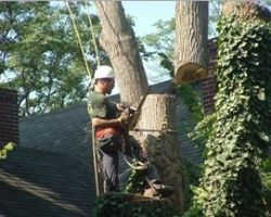 Mid Ohio Tree Service Ltd