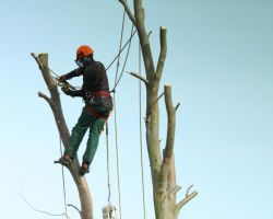 Timberland Tree Company
