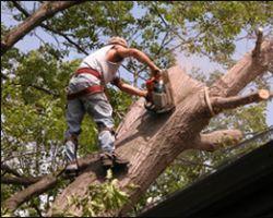 Lanzas Tree Service