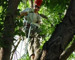 Ambush Tree Co.