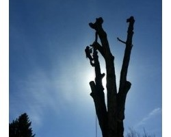 Bear Creek Tree Service
