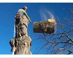 Donovan Arborists
