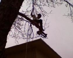 Limb Walkers Tree Service