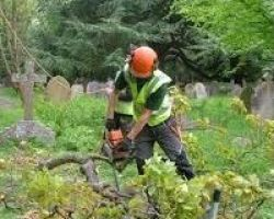 Evergreen Lawn Service