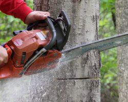 Hulk Tree Service