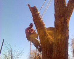 Lumberjack Joes