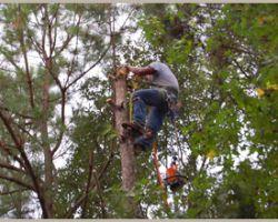 Big D Tree Service