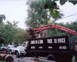 Camden & Son Tree Service