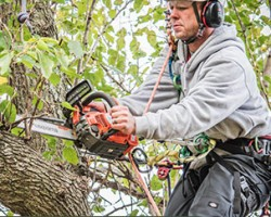 All Star Tree Services