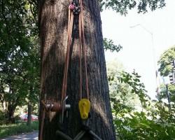 Clark Tree Service