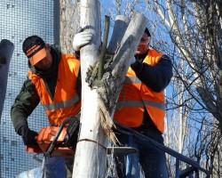 Elis Tree Service Company