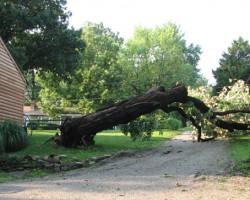 Prentice & Bush Tree Service