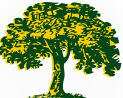 Katy Tree Service