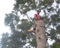 Victors Tree Service