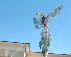 Davilas Tree Service