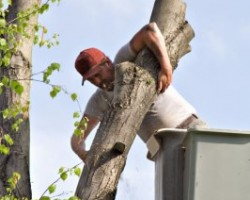 Tree Removal North Las Vegas