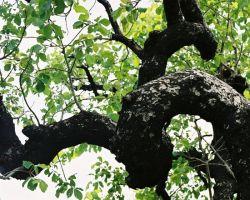 Arborite Tree & Landscape
