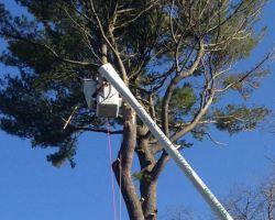 Davis Tree Service