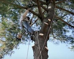 K and S Tree Care Inc