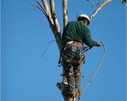 Arts Tree Service