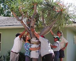 Mellinger Tree and Landscape Service