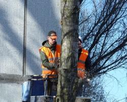 Claycomb Tree Service