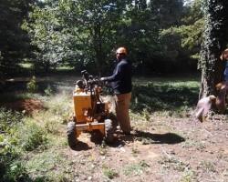 Foree Tree Service