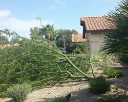 Branch Management Tree Service