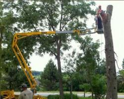Dans Tree Service Inc