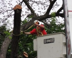 Forester Tree Service