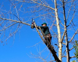 MK Tree Service